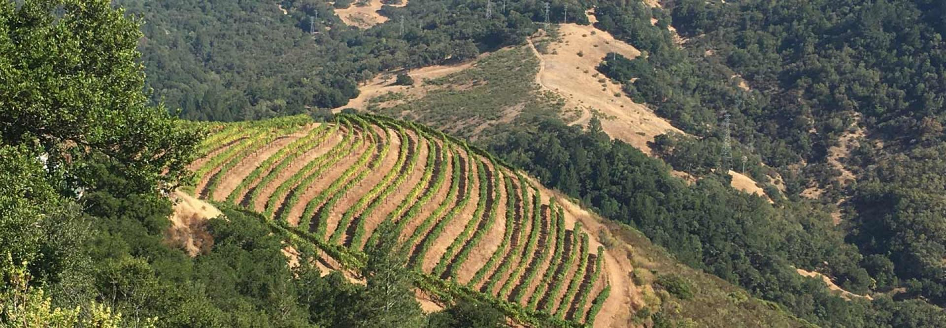 Aerial View of the Vineyard at Immortal Estate, an Evolution of Hidden Ridge