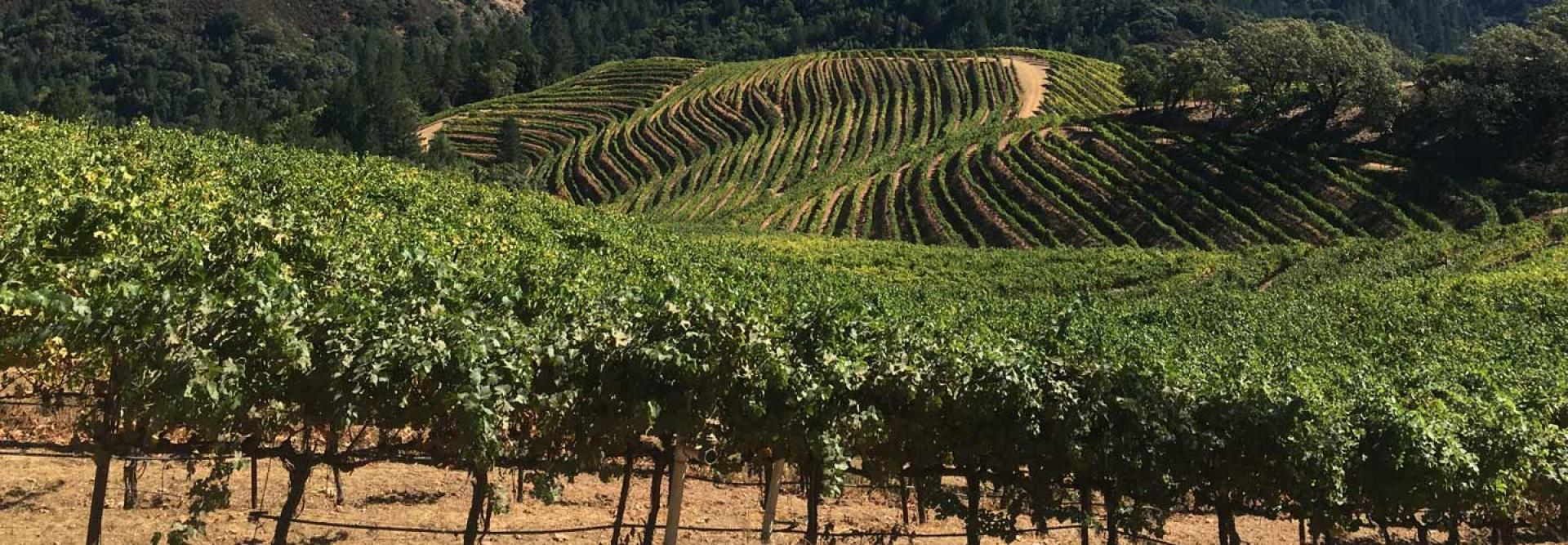 Hidden Ridge Vineyard Fields