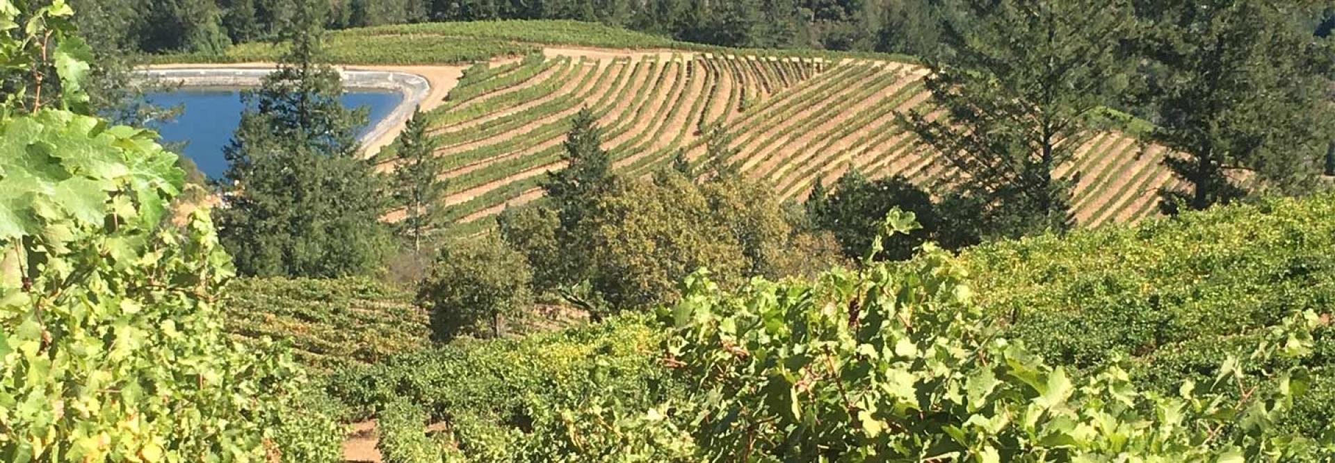 Hidden Ridge Vineyard Overview